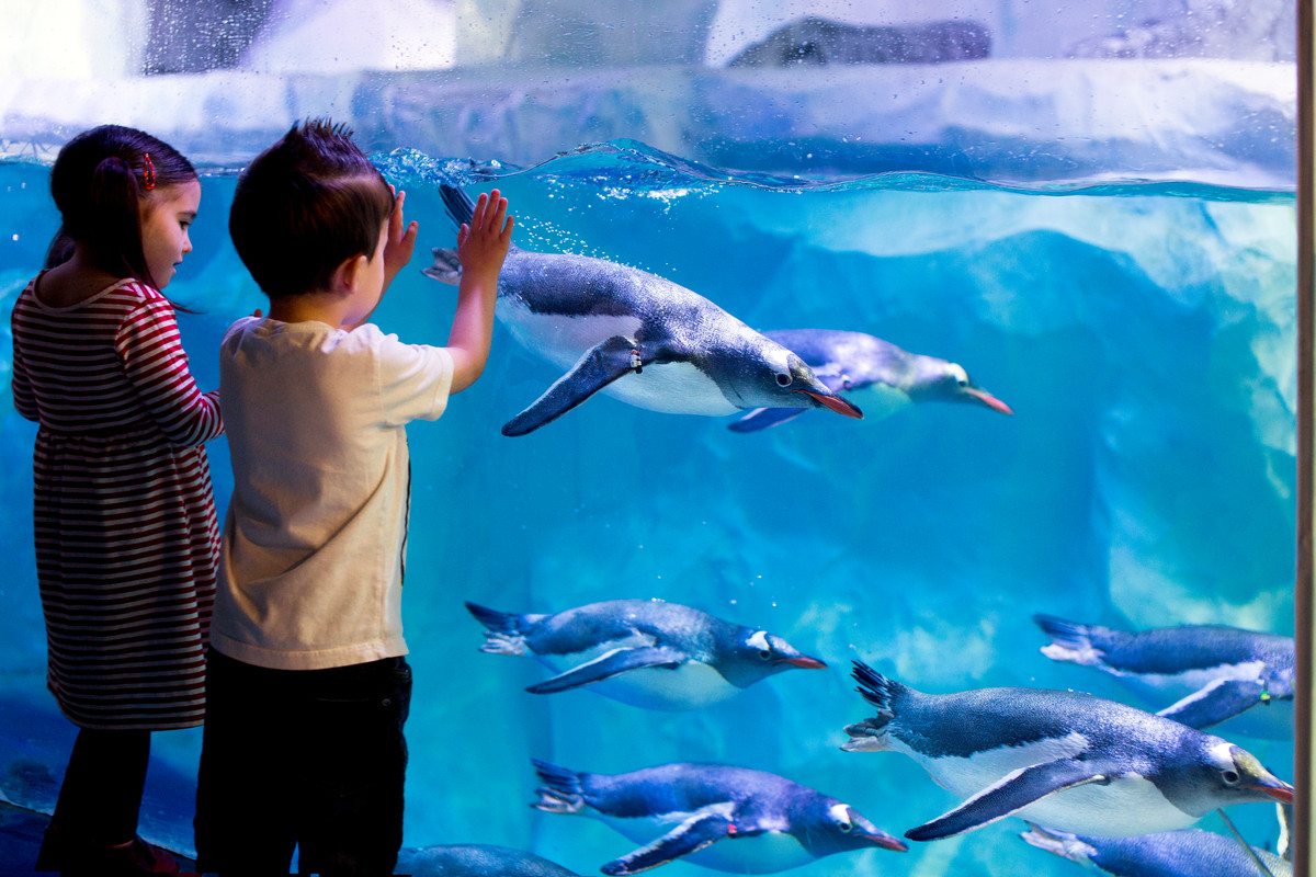 Boy and girl looking at penguin tank